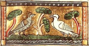 Oiseaux-13